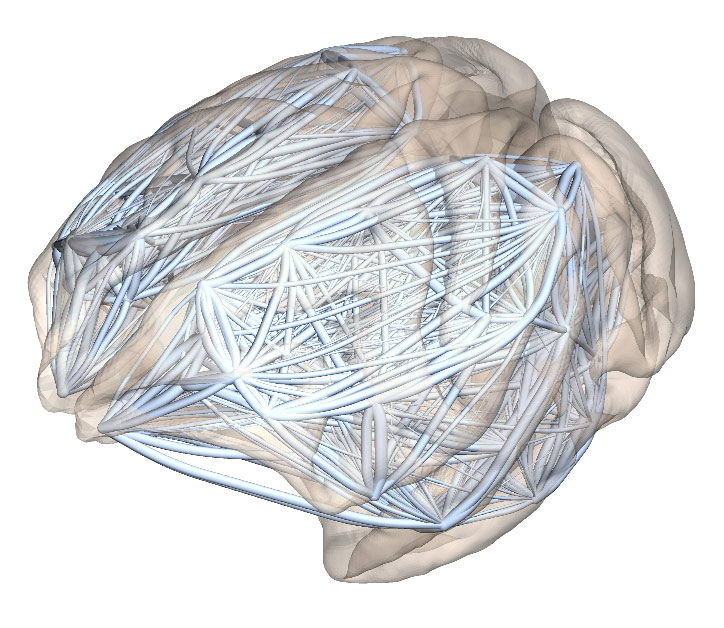 Anatomical connectivity of the macaque brain (artistic visualization based on real data).